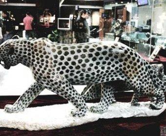 感悟非洲:700件来自津巴布韦土著艺人石雕露面